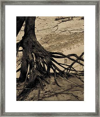 Roots Framed Print by Odd Jeppesen