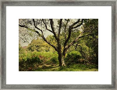 Roots Of Wisdom. Colorful Version. Wicklow Hills. Ireland  Framed Print by Jenny Rainbow