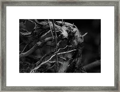 Roots Framed Print by Scott Hovind