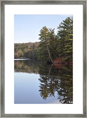 Rope Swing On Bear Creek Lake Framed Print
