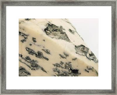 Roquefort Cheese Framed Print by Cordelia Molloy