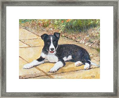 Rory Border Collie Puppy Framed Print by Richard James Digance