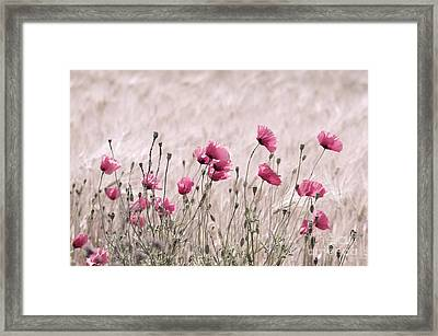 Pink Poppy Field  Framed Print by Tanja Riedel