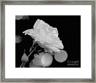 Framed Print featuring the photograph Rose - Black And White by Luana K Perez