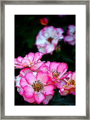 Rose 121 Framed Print by Pamela Cooper