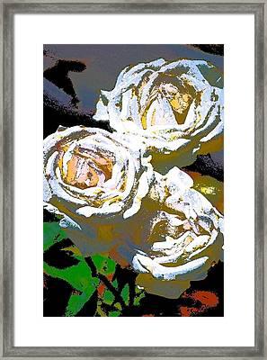 Rose 126 Framed Print by Pamela Cooper