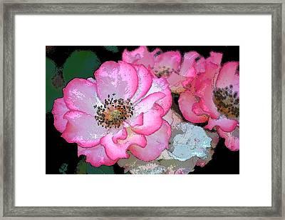 Rose 129 Framed Print by Pamela Cooper