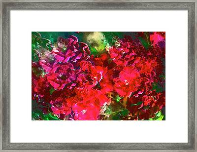 Rose 143 Framed Print by Pamela Cooper