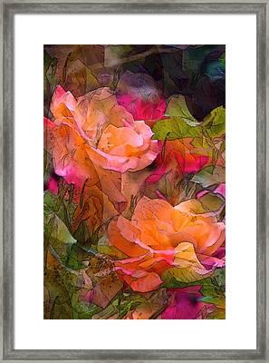 Rose 146 Framed Print by Pamela Cooper