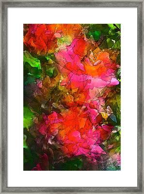 Rose 147 Framed Print by Pamela Cooper
