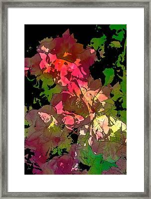 Rose 153 Framed Print by Pamela Cooper