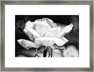 Rose 2 Framed Print by Rosanne Nitti
