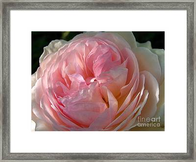 Framed Print featuring the photograph Rose Anglaise by Sylvie Leandre