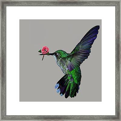 Rose Baring Bird Framed Print by Carly Ralph