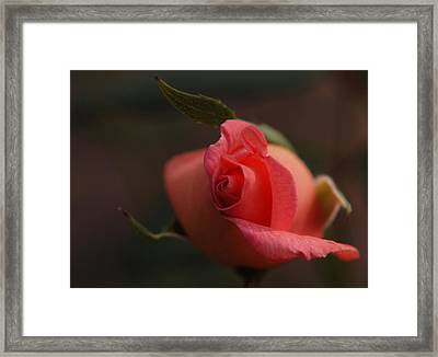 Rose Bud One Framed Print