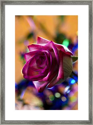 Rose Celebration Framed Print