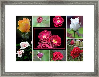 Framed Print featuring the photograph Rose Collage 001 by George Bostian