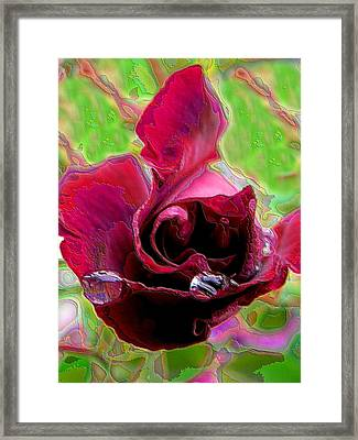 Rose Contours Framed Print