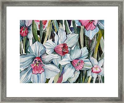Rose Cupped Daffodils Framed Print by Mindy Newman