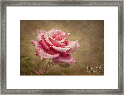 Rose Delight Framed Print by Cheryl Davis