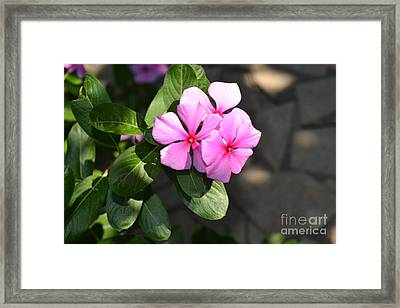 Rose Di Cristallo 2 Framed Print