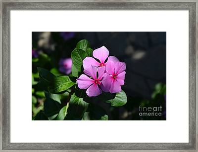 Rose Di Cristallo Framed Print