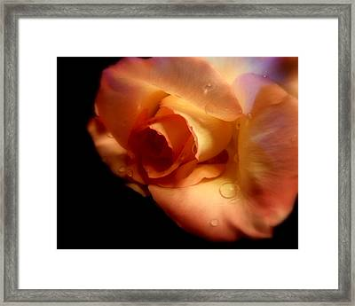 Rose Drops Framed Print by Cindy Wright