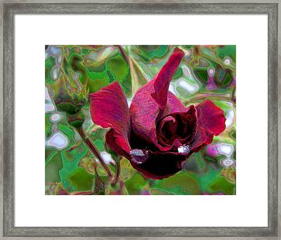 Rose Emerging Framed Print
