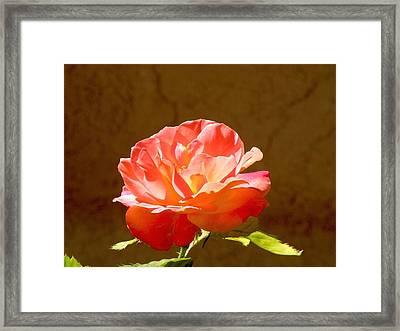 Rose Framed Print by FeVa  Fotos