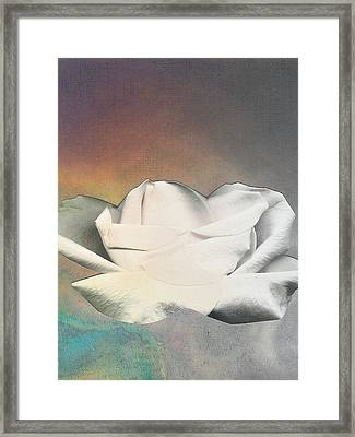 Rose Floating Framed Print by George  Page
