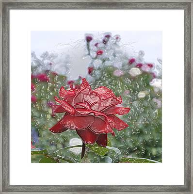 Rose Forever Framed Print by Vijay Sharon Govender