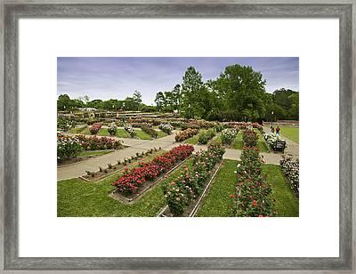 Rose Garden Park Framed Print by M K  Miller