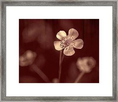 Rose Grain Wildflower Framed Print