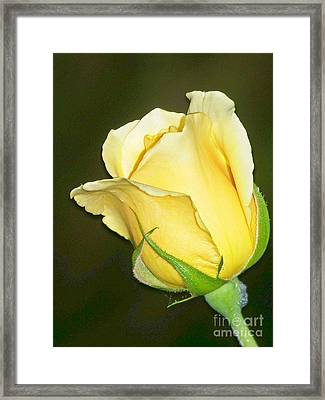 Framed Print featuring the photograph Rose Jaune by Sylvie Leandre