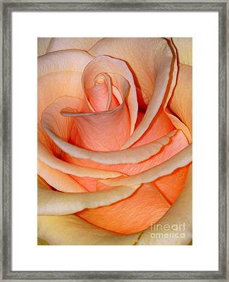 Rose Framed Print by Sylvie Leandre