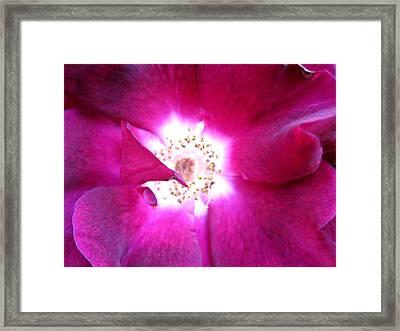 Rose Framed Print by Leon Zernitsky