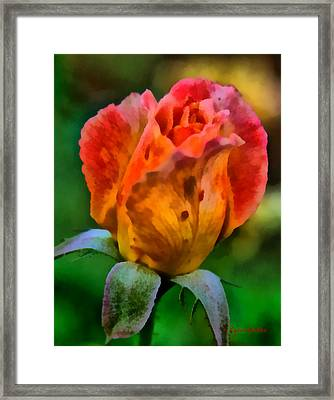 Framed Print featuring the painting Rose by Lynne Jenkins