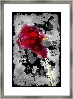 Rose Framed Print by Mauro Celotti