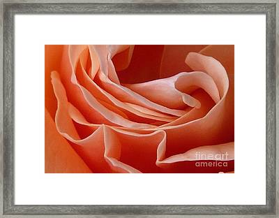 Rose Of Heart Framed Print by Bernard MICHEL