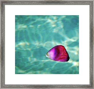 Rose Petal Floating On Water Framed Print by Gerard Plauche