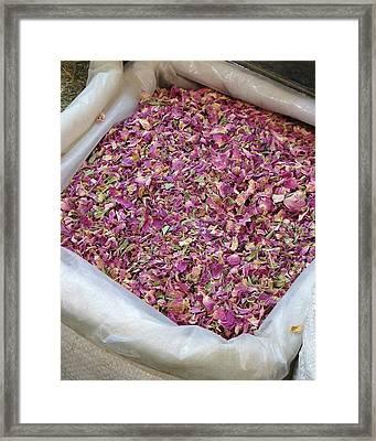 Rose Petals Framed Print by Tia Anderson-Esguerra