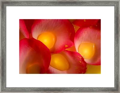Rose Pod Framed Print