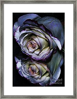 Rose Reflection 2 Framed Print by Marianne Troia