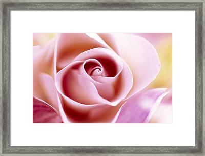 Rose Rosa Sp Close Up Of Pink Flower Framed Print by Jan Vermeer