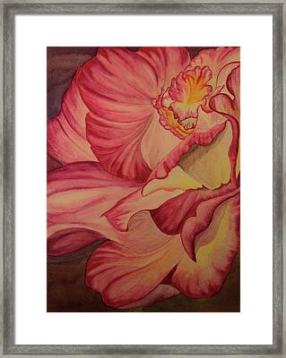 Rose Two Framed Print