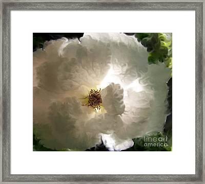 Rose Vaporeuse Framed Print