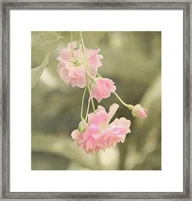 Rose Vine Framed Print