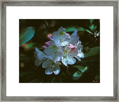Rosebay Rhododendron 3b Framed Print by Gerry Gantt