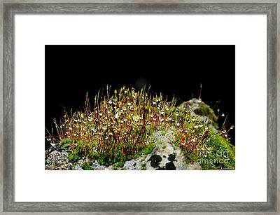 Framed Print featuring the photograph Rosee by Sylvie Leandre