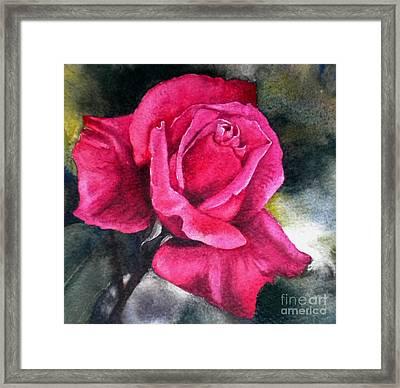 Rosenberger Rosa Family Rosaceae Framed Print by Sandra Phryce-Jones